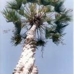 Utilize plantas nativas no paisagismo