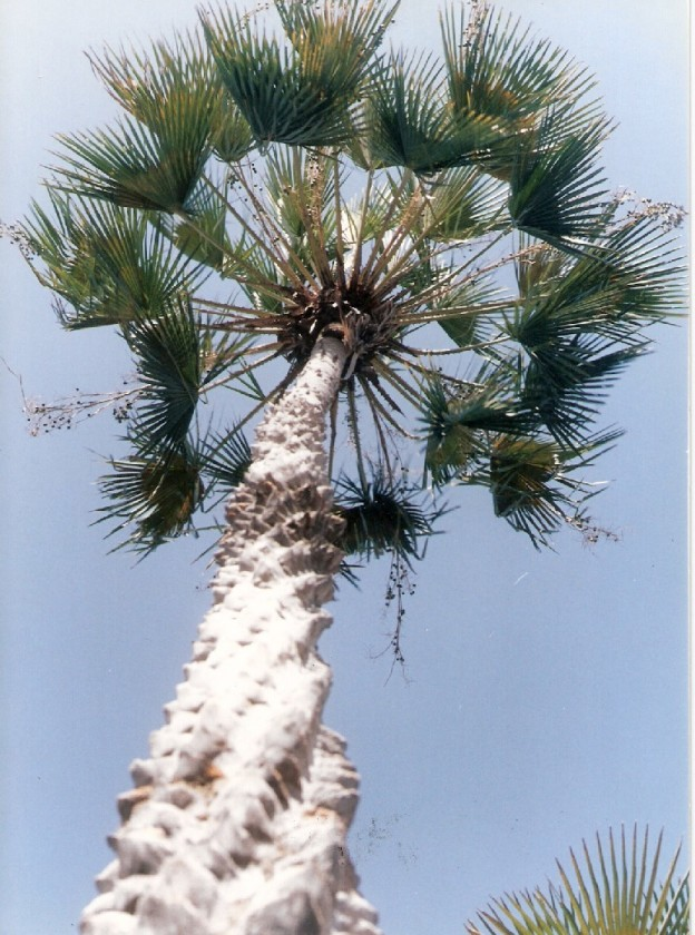 Utilize plantas nativas no paisagismo - SustentArqui