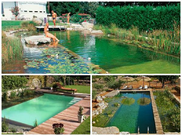 Divina vida piscinas biol gicas for Piscinas biologicas