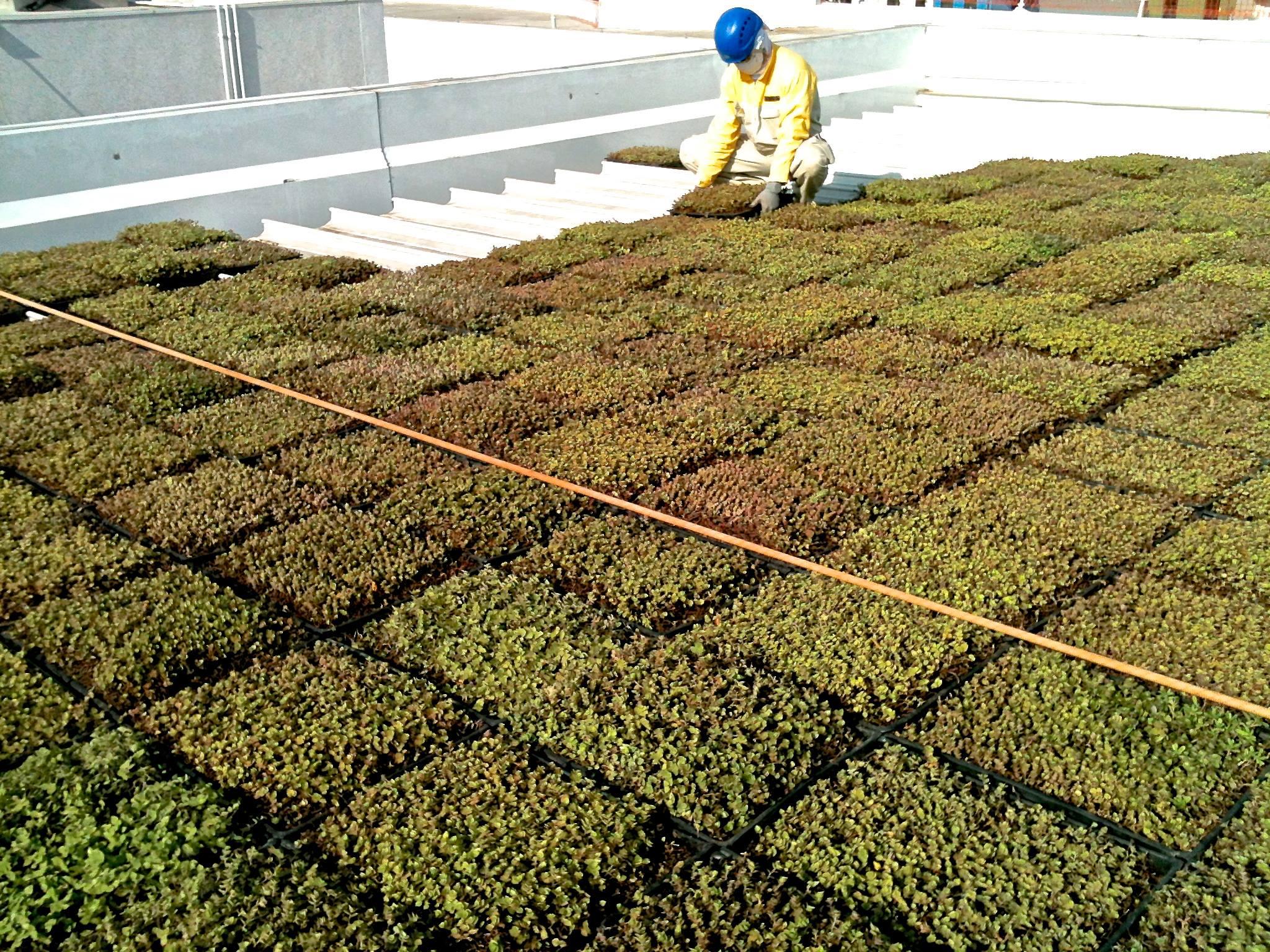 Sistema Modular para Telhado Verde  SustentArqui