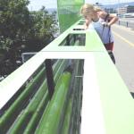 Jardim de algas em viaduto transforma CO2 em combustível na Suiça
