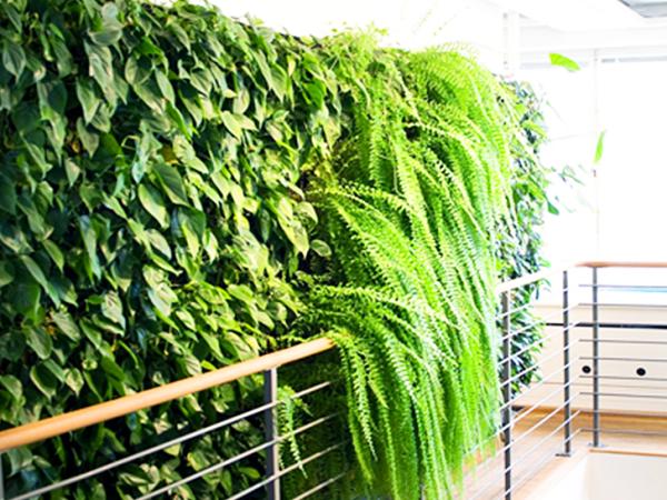 jardins verticais em Nova Iorque