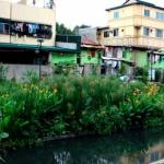 Despoluição ecológica de rios: vantagens e exemplos