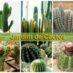 Jardim de cactos: vantagens e cuidados