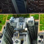 Telhados verdes são sustentáveis?