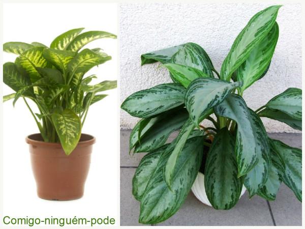 Plantas que filtam o Ar - Comigo ninguém pode