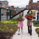 Telhados verdes em Nova Iorque fazem parte do aprendizado de escolas