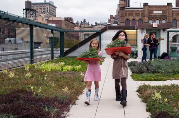 Telhados verdes em Nova Iorque