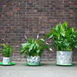 Vaso inspirado em origami cresce junto com a planta