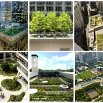 6 exemplos de telhados verdes em Chicago