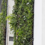 40 empenas cegas receberão jardins verticais em São Paulo