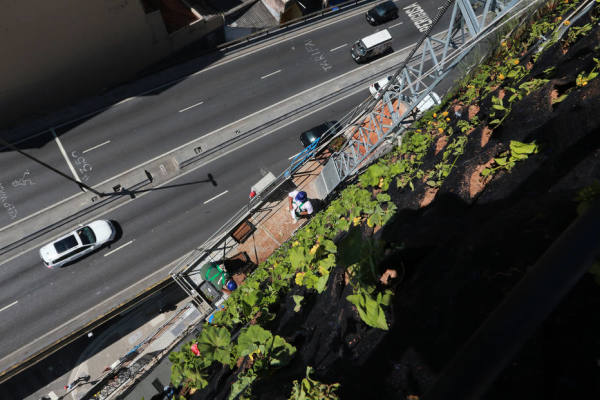 jardim vertical minhocao : jardim vertical minhocao:Minhocão inaugura o segundo jardim vertical do Corredor Verde