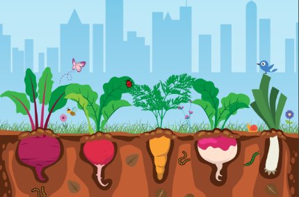 planejar uma horta urbana orgânica