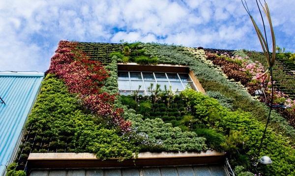 Jardim vertical resistente à seca
