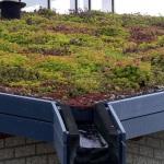 Telhados Verdes em João Pessoa podem ser obrigatórios em novas edificações
