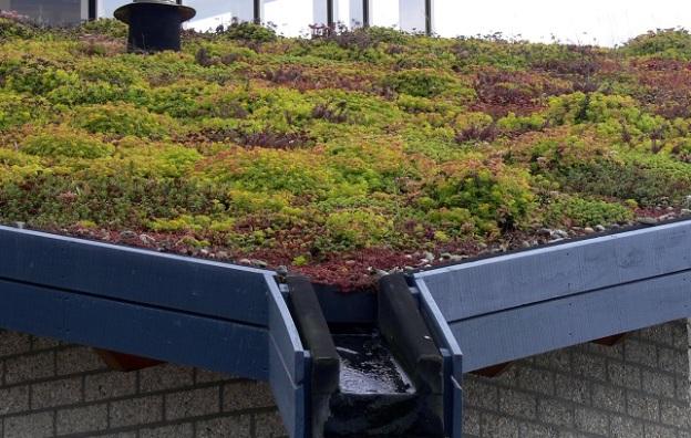 telhados verdes em joão pessoa