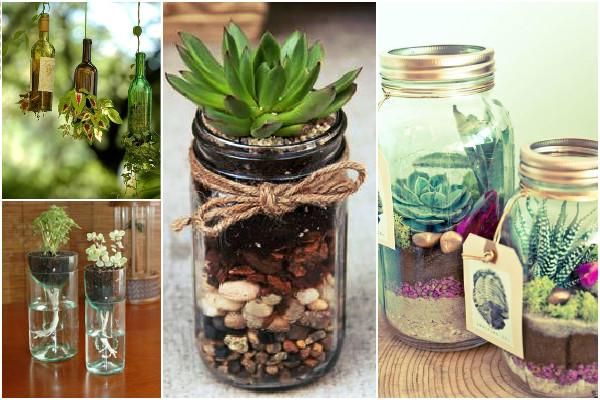 potes de vidro na decoração com plantas e suculentas