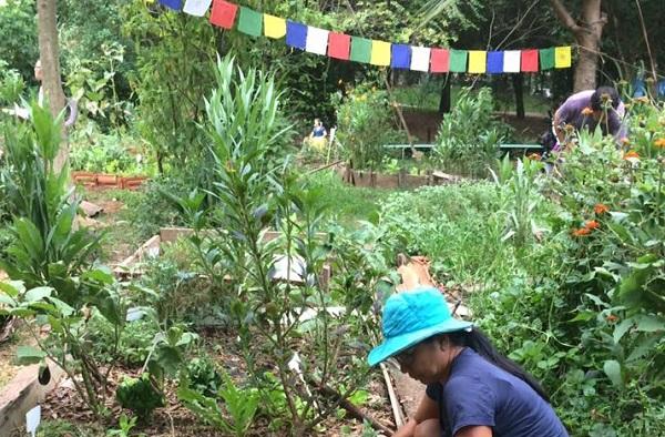 Horta das Corujas: a proposta foi criar um espaço de convívio social e de educação ambiental. Foto: Rosangela Zanchetta.