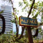 10 Hortas urbanas que fazem parte da cidade de São Paulo