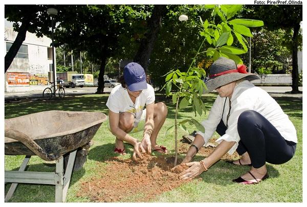 plantio de árvores contra os efeitos das ilhas de calor