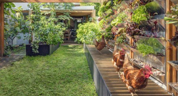 casa autossustentavel galinheiro